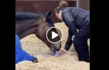ویدیو اسب معتاد چای 226x145 - ویدیو/ اسبی که معتاد چای است!