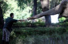 تصویر/ لحظه غذا دادن به یک فیل در آرجنتاین