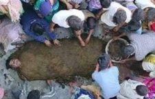 مومیایی فاضله گاو 2 226x145 - تصاویر/ کشف جدید هندوها برای وقایه در برابر ویروس کرونا!