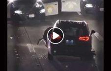 ویدیو سارق موتر سگ پولیس 226x145 - ویدیو/ بازداشت سارق موتر توسط سگ پولیس