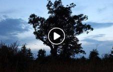 ویدیو عجیب پرت درختان جنگل سرک 226x145 - ویدیو/ صحنه عجیب افتادن درختان جنگل به سرک