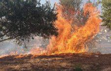 باران آتش صهیونیست 3 226x145 - تصاویر/ باران آتش صهیونیست ها بر سر زارعان فلسطینی
