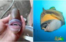 ماهی آدم نما 3 226x145 - صید یک ماهی آدم نما در مالیزیا + تصاویر