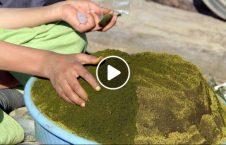 ویدیو کودک نسواری 226x145 - ویدیو/ کودک نسواری!