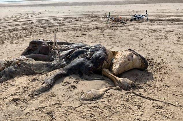 عجیب الخلقه بریتانیا 2 - کشف یک موجود عجیب الخلقه در سواحل بریتانیا + تصاویر