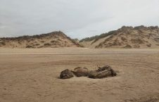 عجیب الخلقه بریتانیا 3 226x145 - کشف یک موجود عجیب الخلقه در سواحل بریتانیا + تصاویر