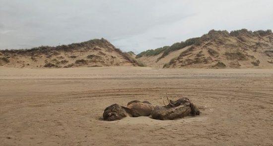 عجیب الخلقه بریتانیا 3 550x295 - کشف یک موجود عجیب الخلقه در سواحل بریتانیا + تصاویر