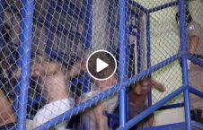 ویدیو تصاویر زندان خطرناک جهان 226x145 - ویدیو/ تصاویری از زندان یکی از خطرناک ترین کشورهای جهان