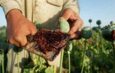 مواد مخدر 226x145 - رواج اعتیاد به مواد مخدر در صفوف نیروهای دفاعی و امنیتی افغان