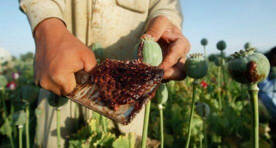 مواد مخدر 550x295 - رواج اعتیاد به مواد مخدر در صفوف نیروهای دفاعی و امنیتی افغان