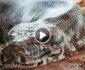 ویدیو/ لحظه نجات سگ از چنگ یک مار غول پیکر