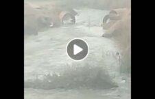 ویدیو تخریب زیرساخت افغانستان طالبان 226x145 - ویدیو/ تخریب زیرساخت های افغانستان توسط طالبان
