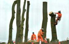 قطع درختان بریتانیا 226x145 - تصویر/ قطع درختان برای احداث خط آهن
