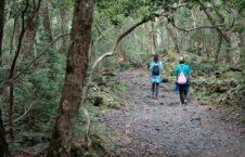 جنگل خودکشی2 226x145 - حقایق باورنکردنی از مرموزترین جنگل دنیا در جاپان + تصاویر