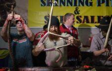 مار پوست کنده تگزاس 226x145 - تصویر/ برگزاری رقابتی عجیب در ایالت تگزاس امریکا