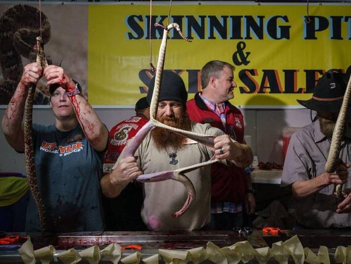 مار پوست کنده تگزاس - تصویر/ برگزاری رقابتی عجیب در ایالت تگزاس امریکا