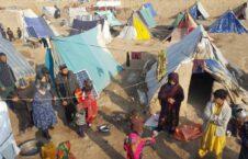 بیجا شده 226x145 - جنگ و ناامنی ۱۷۰۰ خانواده را در هرات آواره کرد