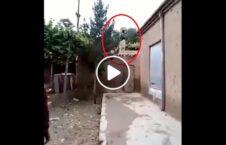 ویدیو طالبان بغلان سپر انسانی 226x145 - ویدیو/ استفاده طالبان از مردم بغلان به عنوان سپر انسانی
