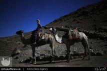 مرد شتر سوار در صحرای سینا مصر